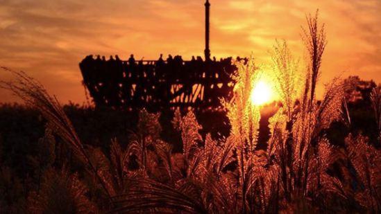 「天空公園」 只要邁入秋冬,天空公園就會有遍地的紫色芒草,每年還會有紫色芒草節,吸引很多韓國人與觀光客前來,在晚上看起來,特別向點點星芒,非常迷人。