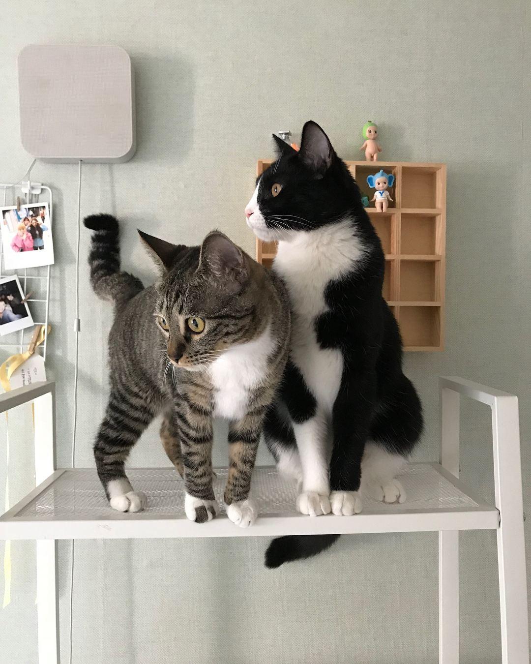 也有過去的採訪報導被挖出來,表示金龍國和成員們一起住宿舍的時候就對貓咪不怎麼關心,甚至成員中也有兩位成員對貓咪過敏,對此許多粉絲粉怒的表示:「談戀愛可以,棄貓就是不行!」,也讓大批貓奴跳出來指責金龍國的行為,雖然金龍國在親筆信中解釋是因為與新貓的問題才送走露西,但這個理由根本不被粉絲接受...