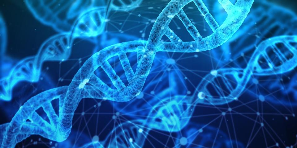 以色列研究組表示催產素受到注目的理由為,催產素被證實「能降低壓力」,由於催產素對賀爾蒙的作用過程與降低緊張感的新藥開發相關,研究組也特別關注催產素來源的賀爾蒙對腦部與副交感神經的影響過程。