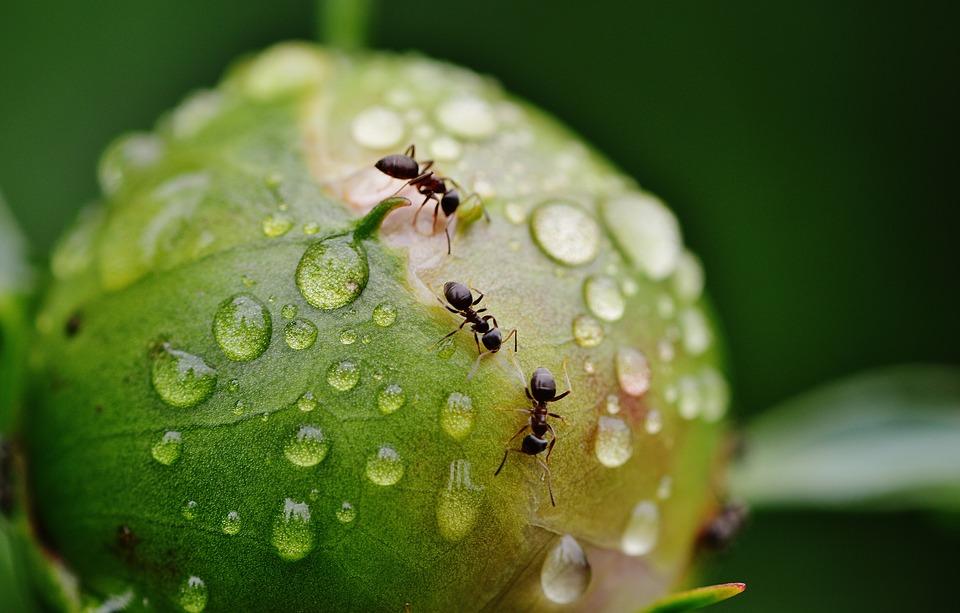 4.螞蟻 如果你夢到螞蟻走來走去的話,代表你最近因為說話倔強的朋友而感到生氣,也意味著你重視朋友和家人的關係。此外,你正無意識地準備好與周圍的人一起工作,也做好了努力的決心。